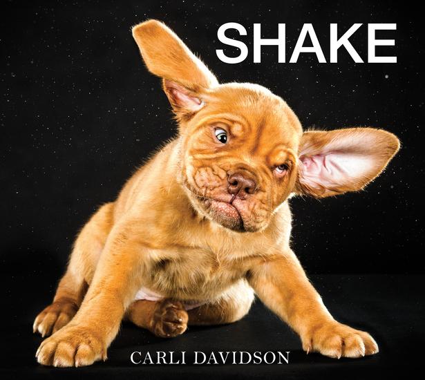 Shake - cover