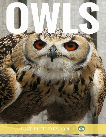 Owls - cover