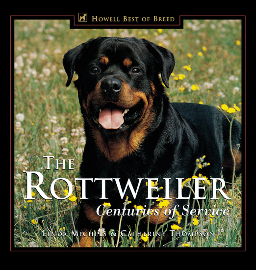 labradors and rottweilers essay Compare labrador retriever vs rottweiler dog breed and find features which are most important for you and which is the best or suitable labrador retriever and rottweiler at dogspotin.