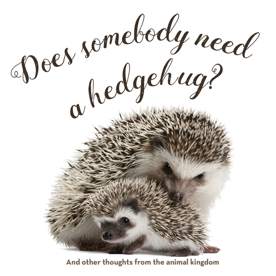 Does Somebody Need a Hedgehug? - And Other Thoughts From the Animal Kingdom - cover