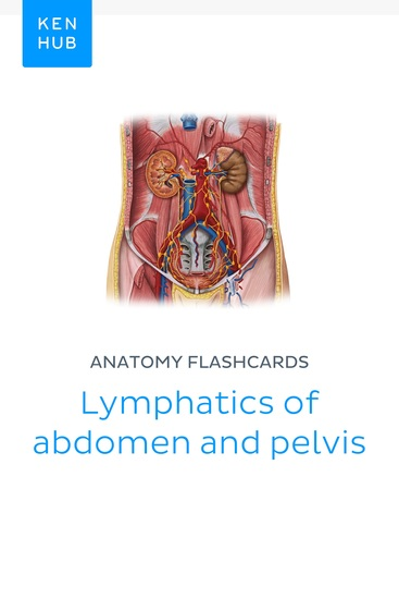 Anatomy flashcards: Lymphatics of abdomen and pelvis - Learn all organs on the go - cover