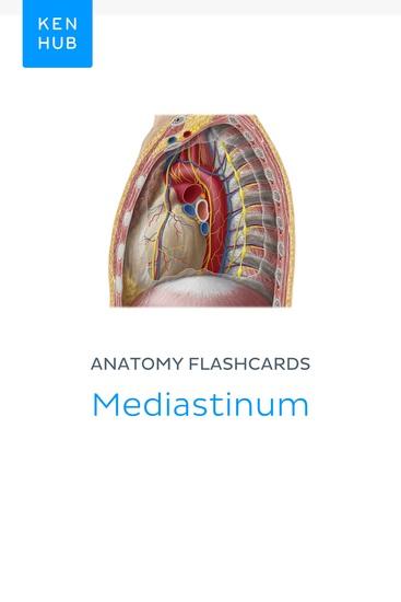 Anatomy flashcards: Mediastinum - Learn all organs on the go - cover
