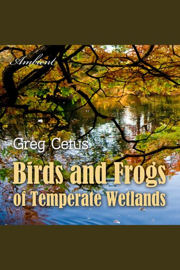 Birds and Frogs of Temperate Wetlands - Atmospheric Audio for Productivity and Focus - cover