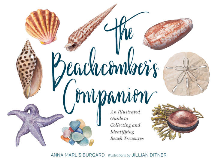 The Beachcomber's Companion - An Illustrated Guide to Collecting and Identifying Beach Treasures - cover