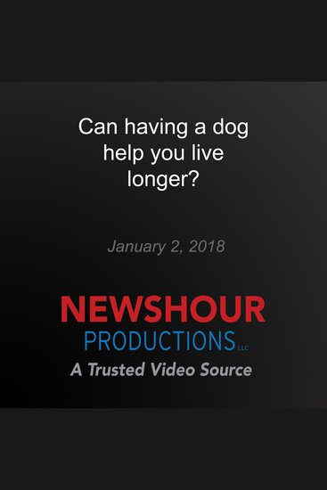 Can having a dog help you live longer? - cover