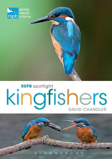 RSPB Spotlight Kingfishers - cover
