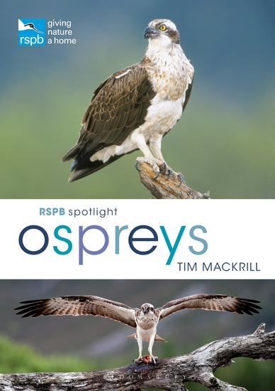 RSPB Spotlight Ospreys - cover