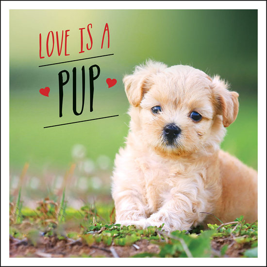 Love is a Pup - A Dog-Tastic Celebration of the World's Cutest Puppies - cover