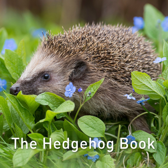 The Hedgehog Book - cover
