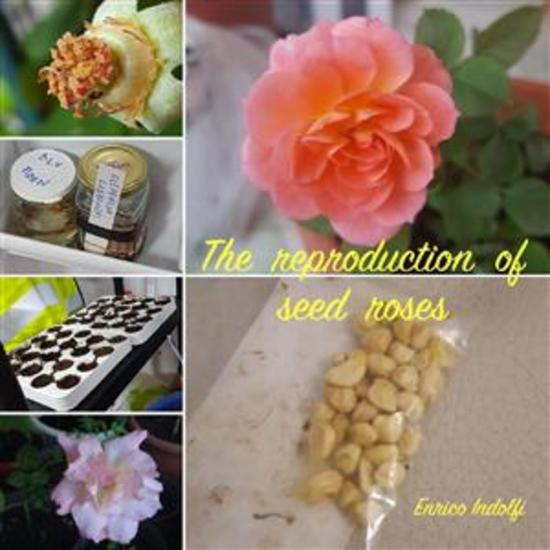 The reproduction of seed roses - cover
