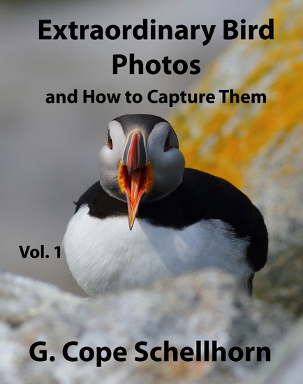 Extraordinary Bird Photos and How to Capture Them Vol 1 - cover