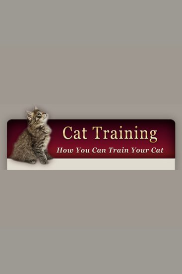 How to Train Your Cat - Learn the basic training your cat needs - cover