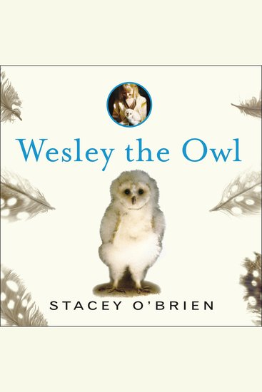 Wesley the Owl - The Remarkable Love Story of an Owl and His Girl - cover