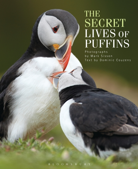 The Secret Lives of Puffins - cover